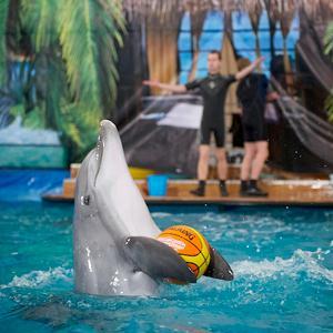 Дельфинарии, океанариумы Колюбакино