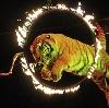 Цирки в Колюбакино