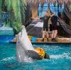 Дельфинарии, океанариумы в Колюбакино